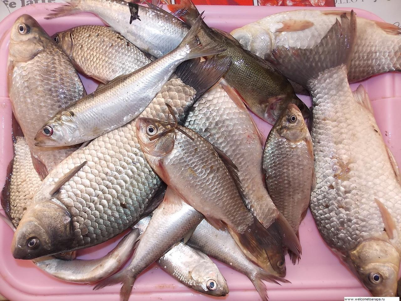 рыбалка в варениковской форум