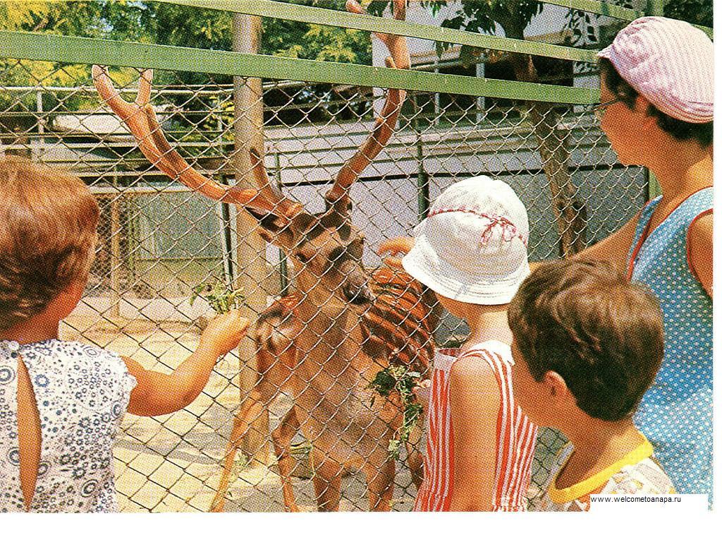 Анапа зоопарк,