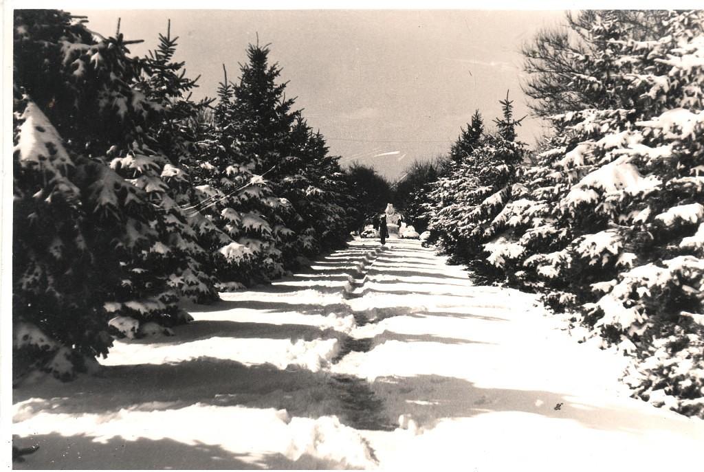 анапа зима 1980 года,