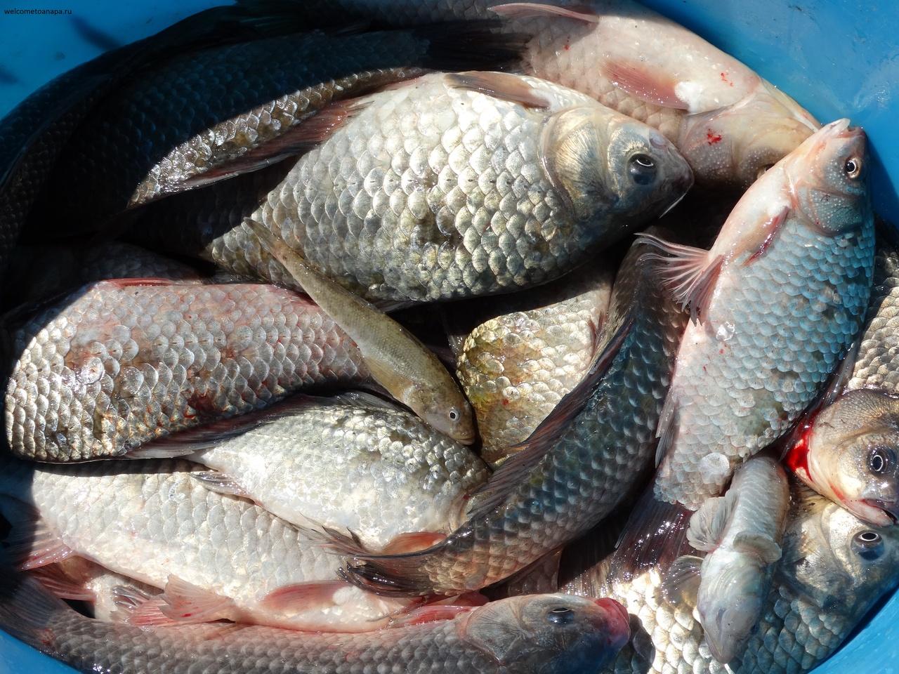 клев рыбы темрюкский район