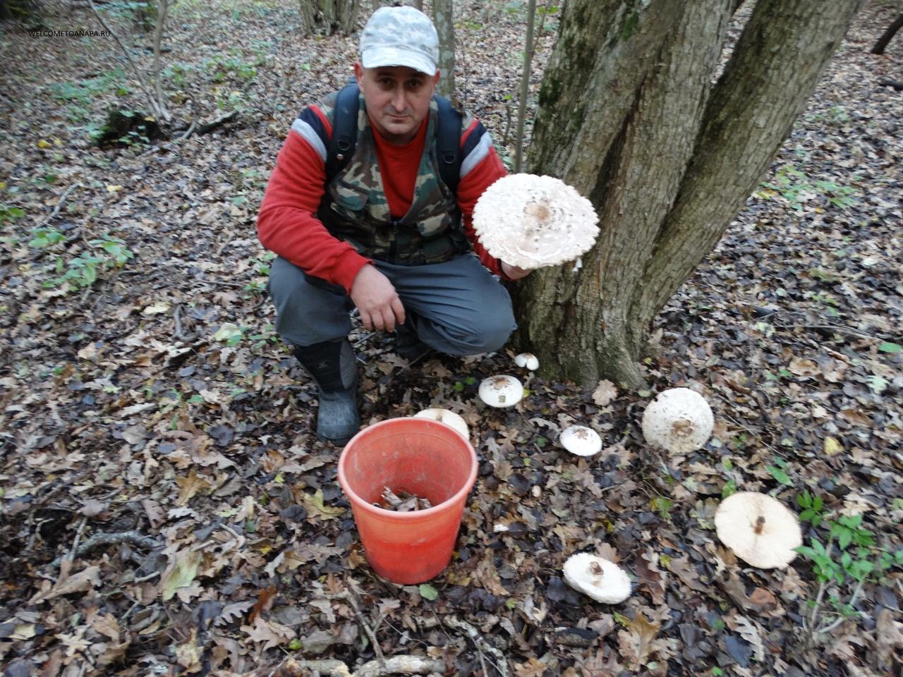где можно нарвать грибов в омске